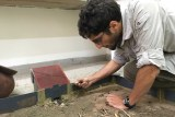 Dr Erik T. Frank leans over an experiment on Matabele ants within a lab
