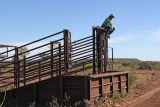 a man sitting on the top rail of a cattle yard, talking on the phone.