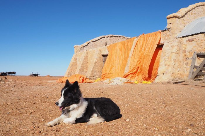 Black and white dog sits in front of stone shed with emergency orange sheet overhanging one wall against a blue sky.