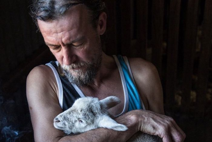 A shearer is sitting, holding a lamb on his lap, and looking down at it.