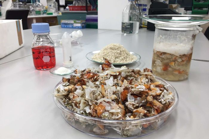 Bowl of prawn shells in a lab.