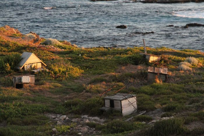 Small wooden structures that act as penguin huts are pictured on Middle Island
