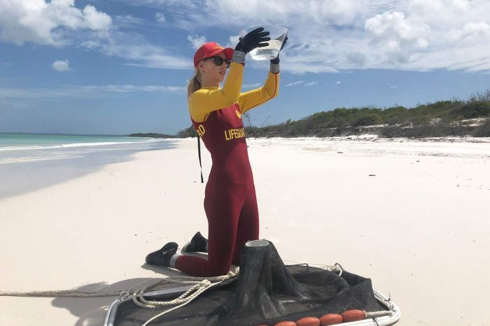 Lifesaver wearing a stinger suit stands on a beach looking for Irukandji jellyfish in water inside a plastic container.