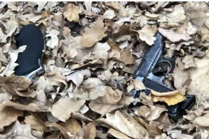 Two guns in dried leaves in Fawkner Park.