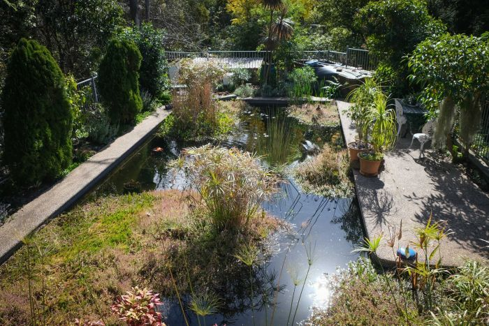 A wide shot of a pool to pond, full of reeds and water plants.