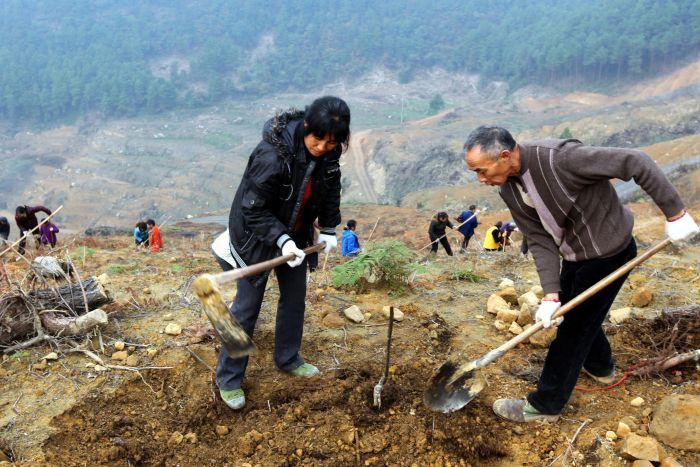 People dig a hole on a hillside to plant a tree.