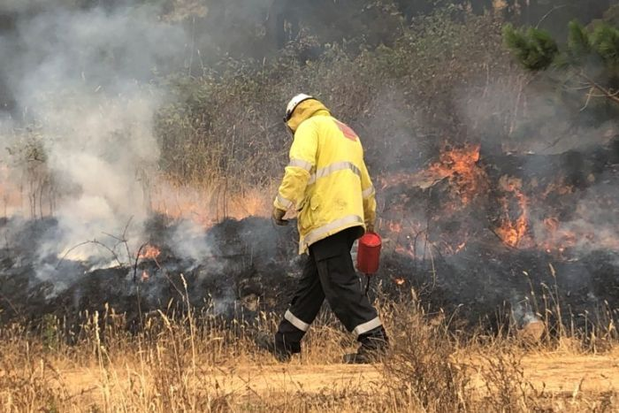 An RFS firefighter lights a controlled burn on a containment line.