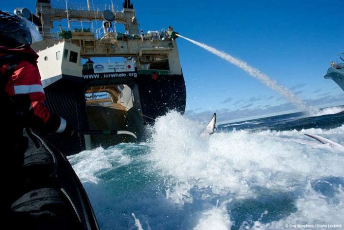 Sea Shepherd workers from the Bob Barker try to stop the Nisshin Maru loading a dead whale
