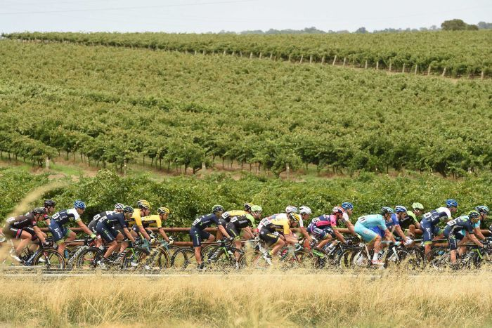 Tour Down Under riders go through vineyards on stage one from Tanunda