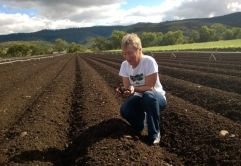 Soil scientist in a vegetable paddock holding soil