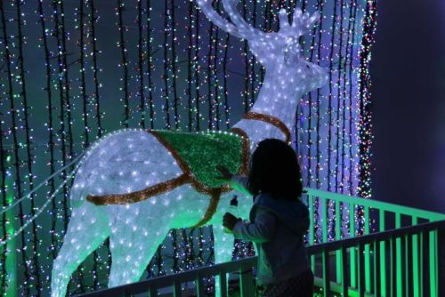 A girl reaches out to touch a reindeer as part of the 12 days of Christmas display.