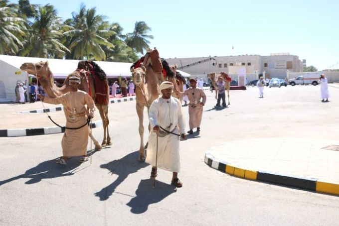 Omani colleagues of British explorer Mark Evans prepare camels for his expedition.