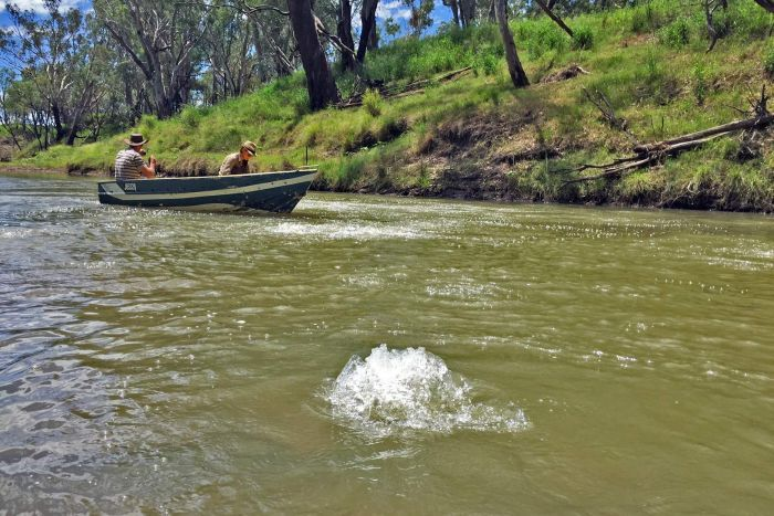 Bubbling in Queensland's Condamine River