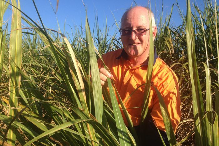Barry smiles at the camera while checking cane crops for CSD