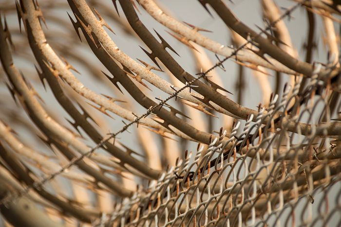 Barbed wire fence at Don Dale Youth Detention Centre