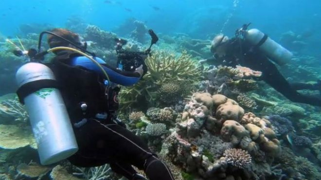 Diving on the Great Barrier Reef (Courtesy Mark Steven)