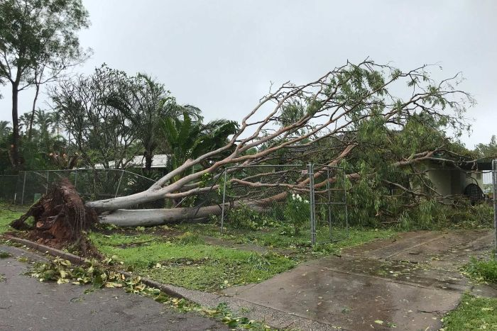 A house crushed by a tree in Darwin.
