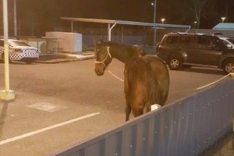 A police officer looking at a horse