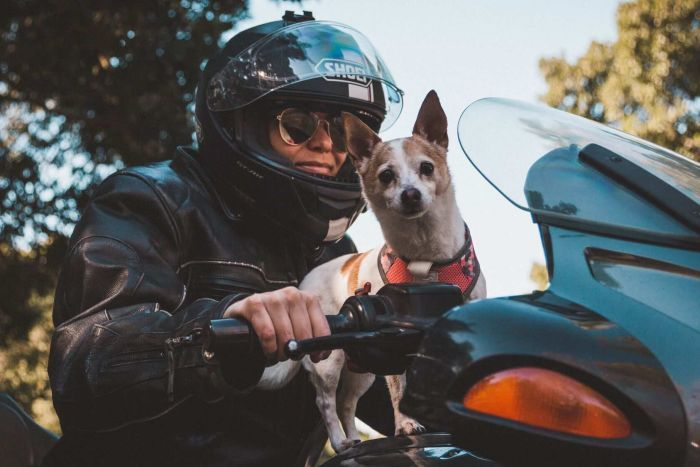 A dog riding on the handlebars of a motorbike.