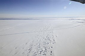 An aerial view of a crack at the Pine Island Glacier ice shelf seen in western Antarctica (Reuters: Goddard Space Flight Center)