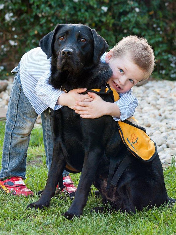 Image result for autism assistance dogs