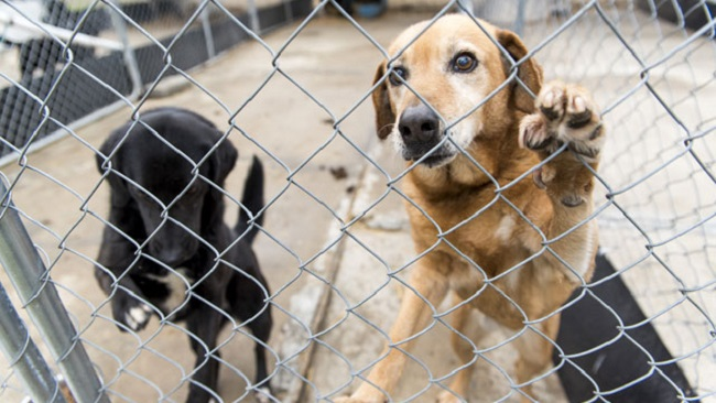 Maryland pet stores sue to keep puppy mills | ABC27