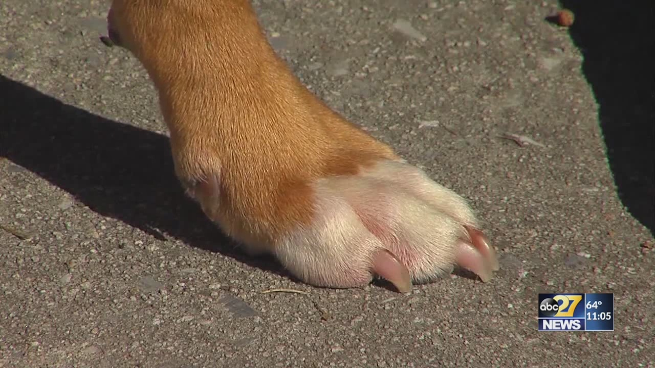 Dog attacks prompt officials to raise awareness about pet rules, consequences