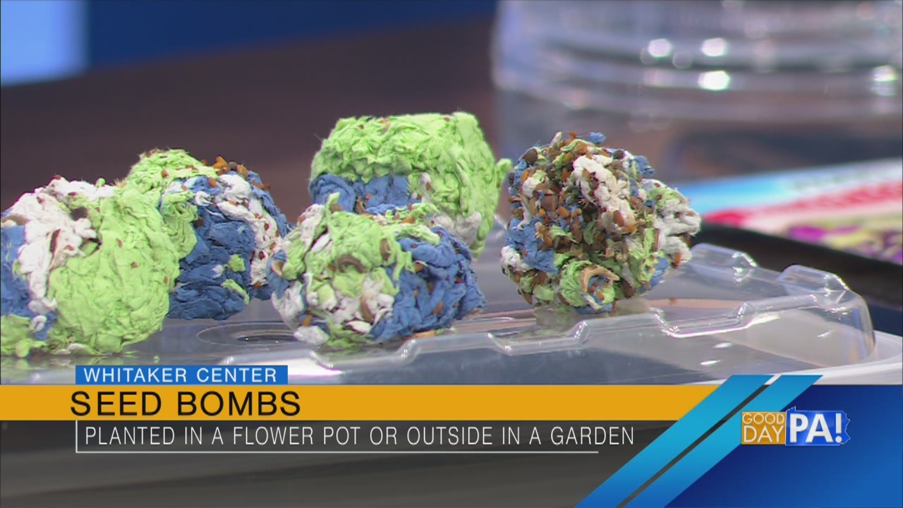"""How to make """"seed bombs"""" with your children"""