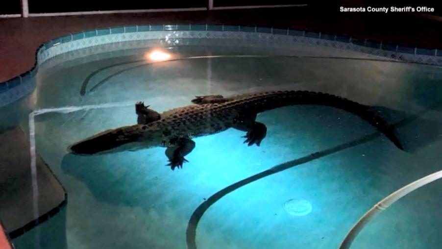 gator inside edition