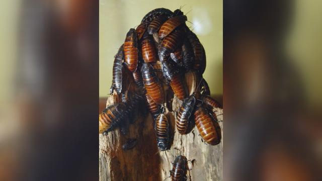 cockroach_1527453738083_43685276_ver1.0_640_360_1548814378477.jpg