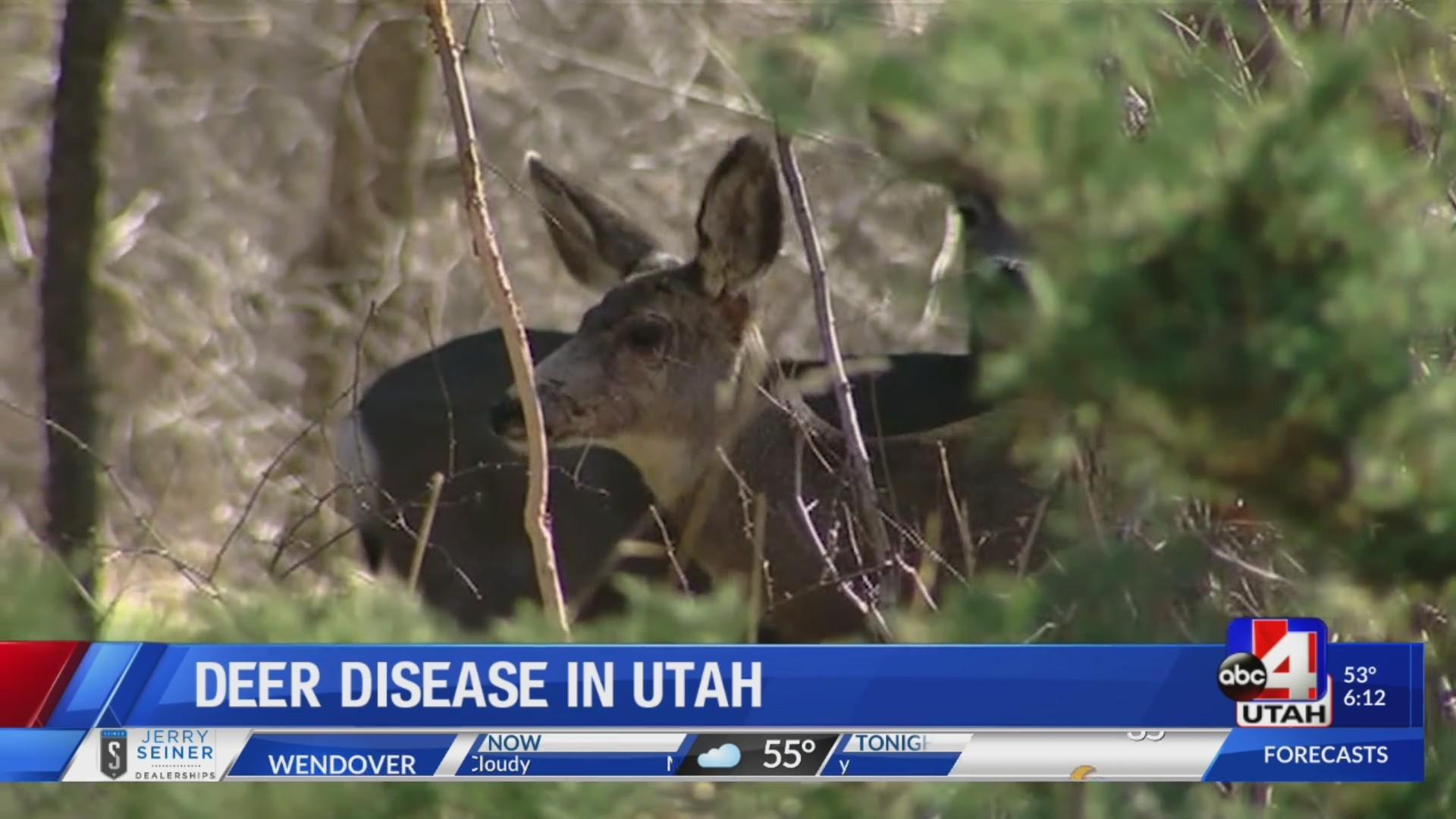 Zombie deer diseases