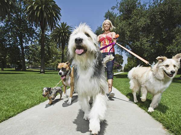 photo de garde d'animaux, pet sitter et dogsitter