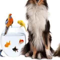 Vous aimez les animaux ? Devenez Pet Sitter et proposez de la Garde d'Animaux