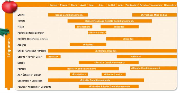 Calendrier des activités de l'ANEFA