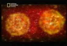 No ventre materno 2 de 11- Fertilização do óvulo