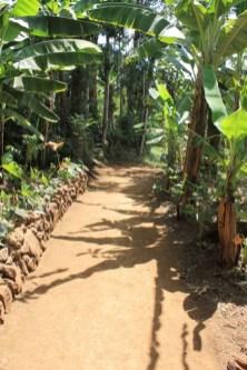 banana leaf shadows