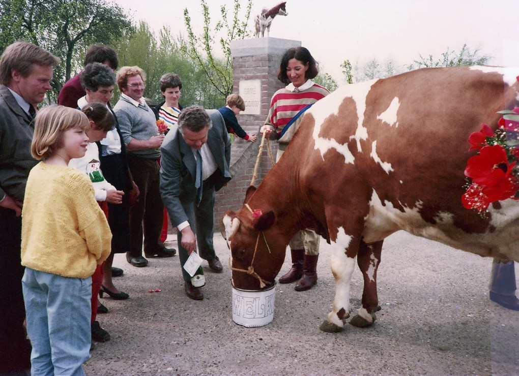 1979 - Arrival of TULIPE in Holland with Anton Van Nieuwenhuize 4 Hannover-Hills Triple Threat daughters from Switzerland were brought to the Paris show. Unfortunately, IBR disease infected them all. When they came back to Switzerland 3 of them were immediately slaughtered, as the country was free of IBR. To avoid to slaughter the best of these 4 cows, Guex Triple TULIPE Red EX-98, J-L Schrago had her transferred to Holland. She survived until 15 years old and produced many famous offsprings. At the same time, TULIPE did a great promotion of the Red Holstein crossing program. At this time, Holland started a large crossing program with the MRY breed.