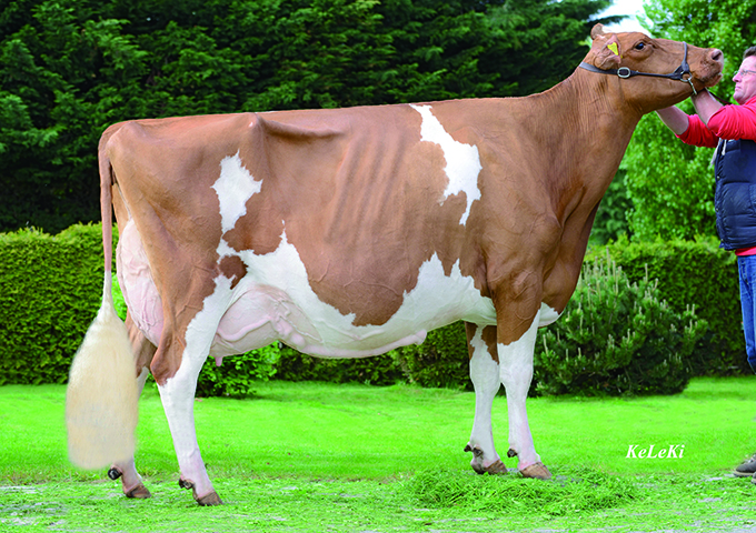 Suard Jordan Irene Red EX-96 Stature: 154 cm = 62 in Born on December 3rd, 2004 Production until 08-2014: 5 lactations - 70'643 kg (155'415 lbs.) 4,69 % F 3,48 % protein