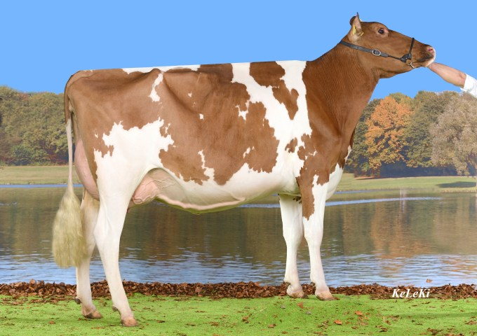 Les Troncs VINCENT Tunis Red VG-85 2 y. - 1st place 5th class, Expo Veveyse Bulle, 2015 Owner / Besitzer / Propriétaire / Proprietario: Benoit Dévaud, Porsel FR, Switzerland