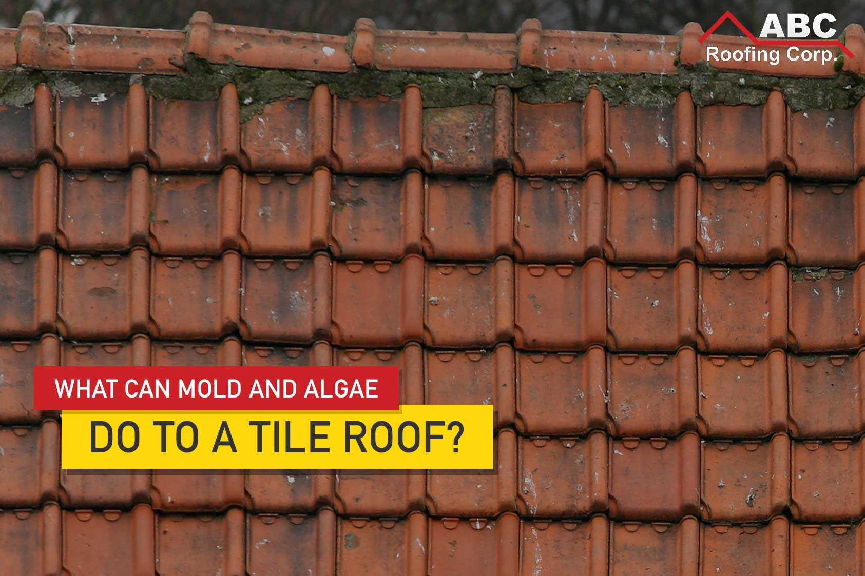 roof algae and mold nip them in the
