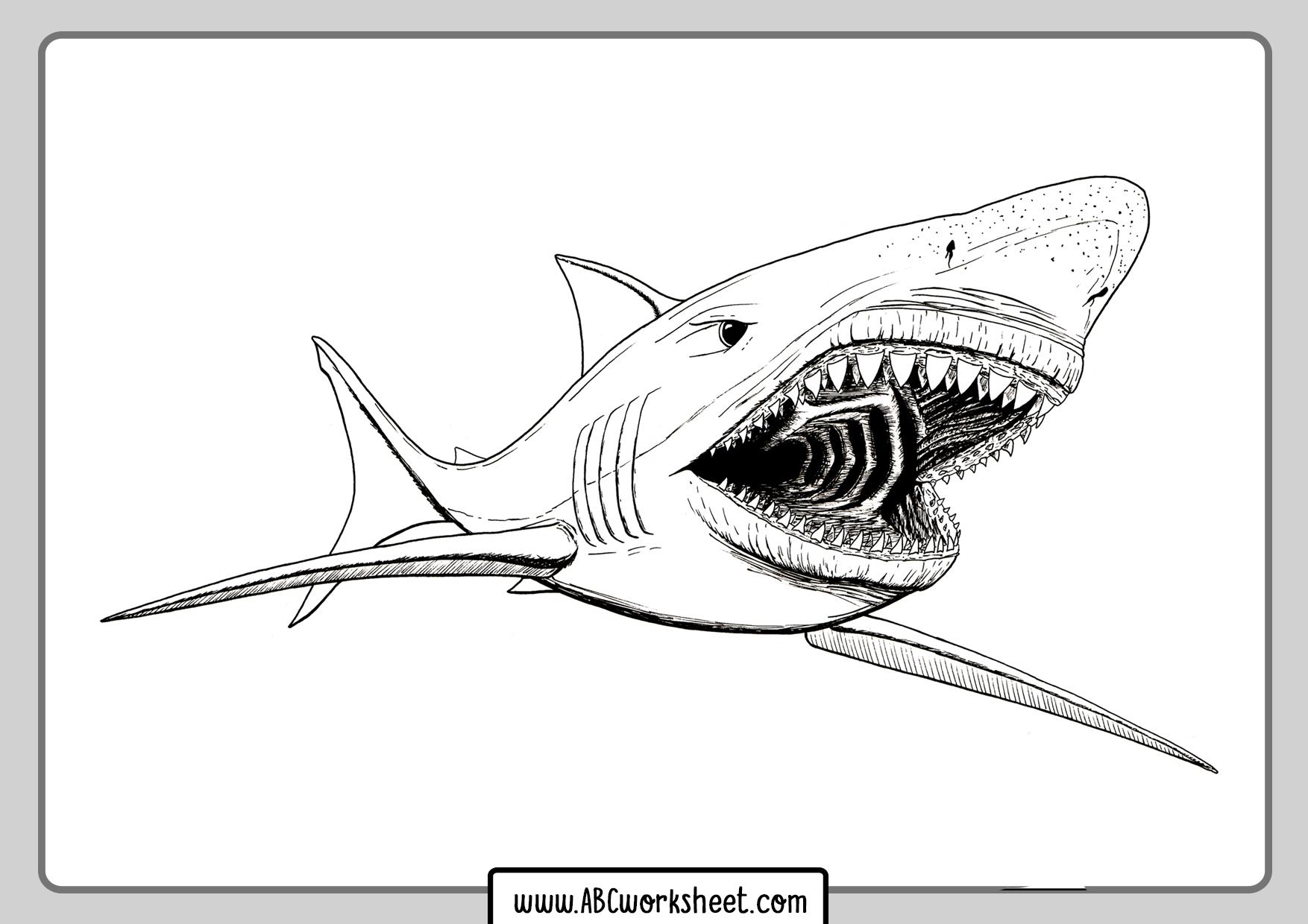 Shark Math Worksheets