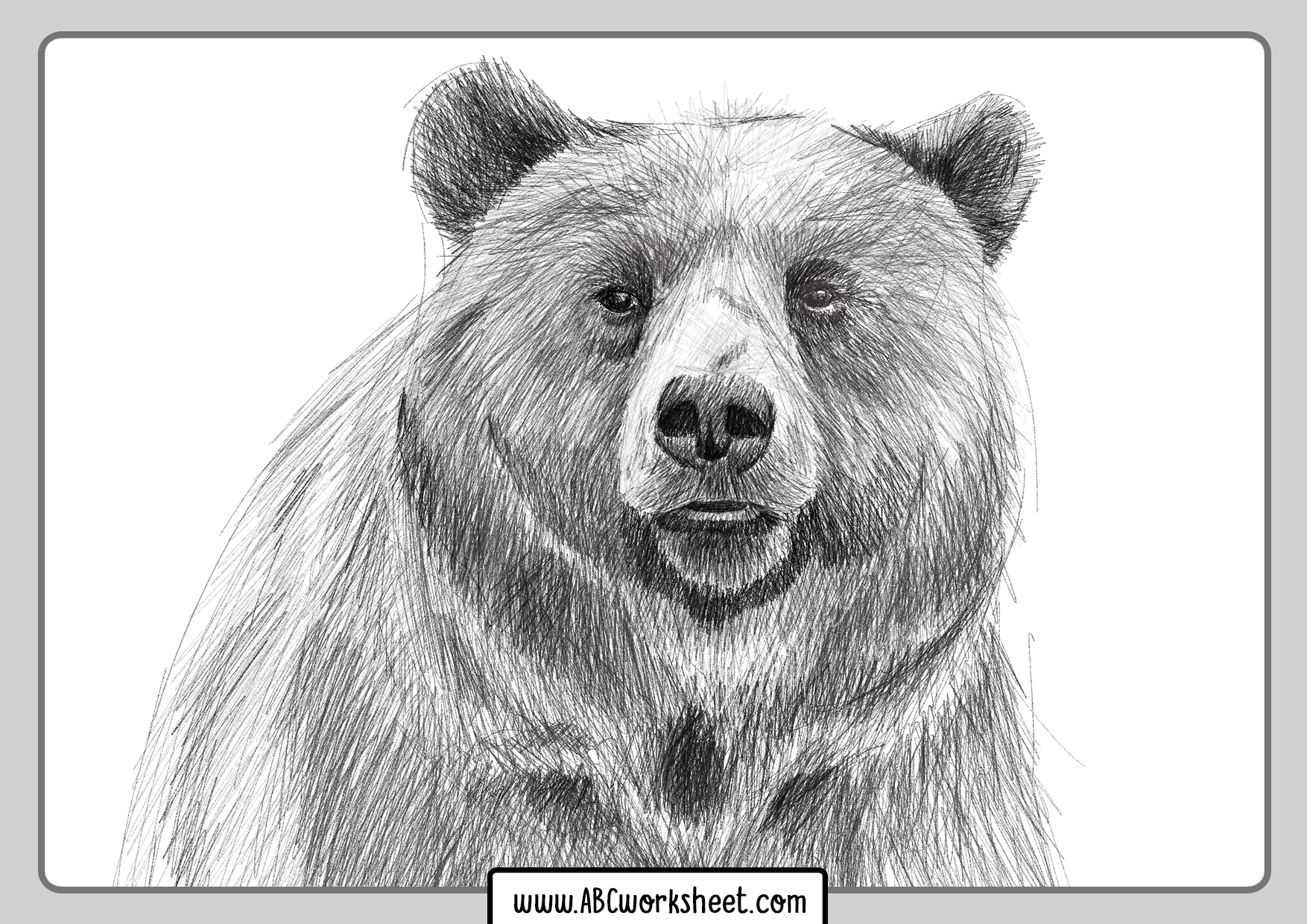 Grizzly Bear Coloring Drawings