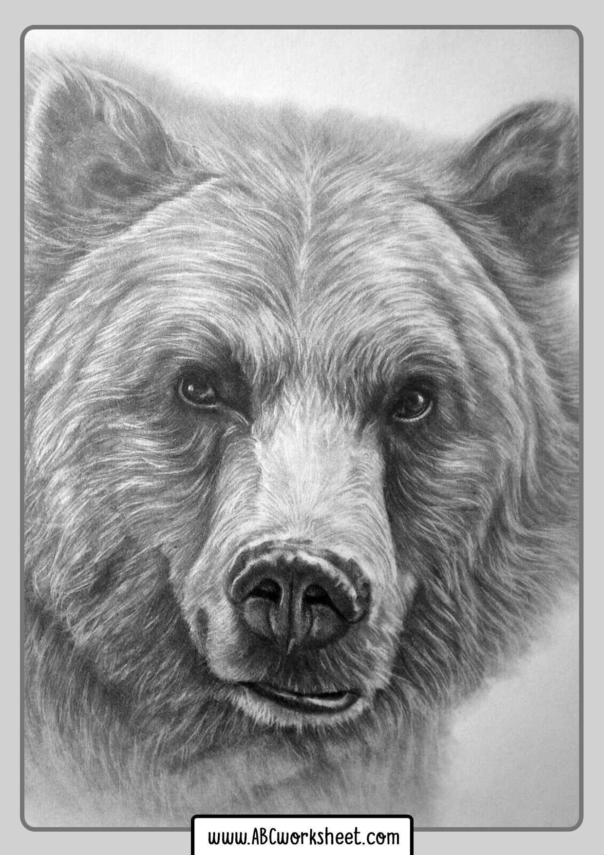 Grizzly Bear Face To Coloring