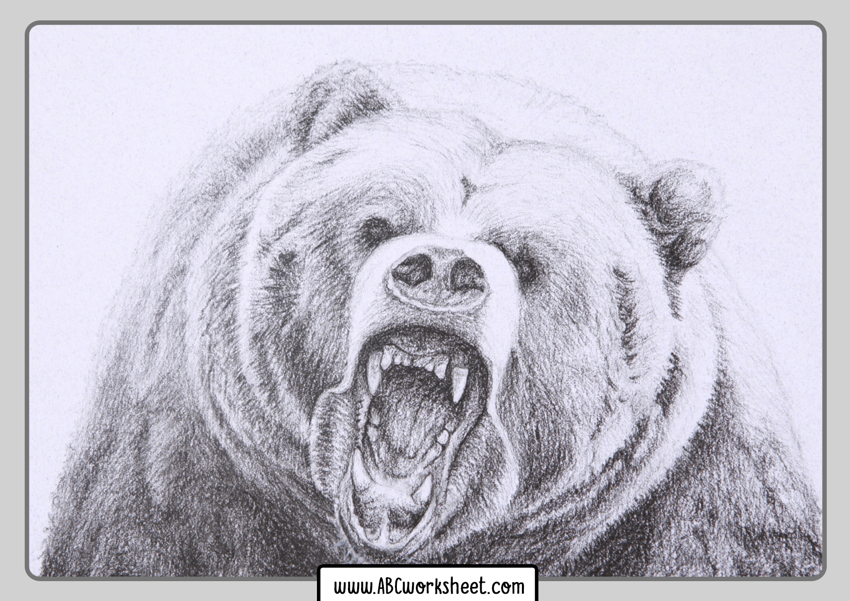 Grizzly Bear For Coloring