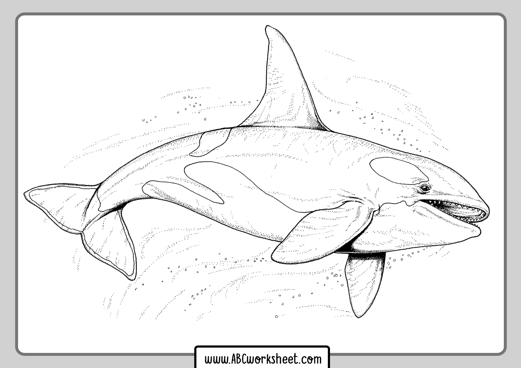 Orca Killer Whale For Coloring