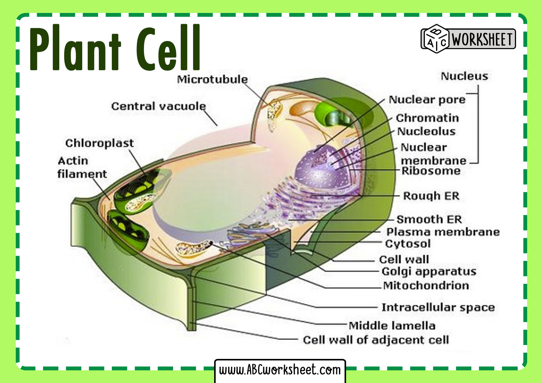 Plant Cell Parts And Structure