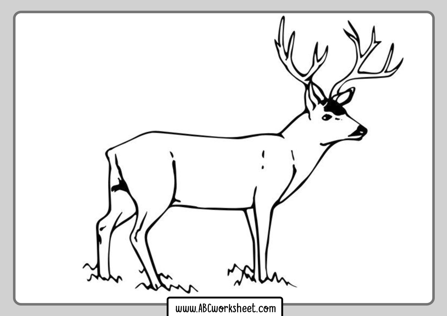 Coloring Deer Drawings