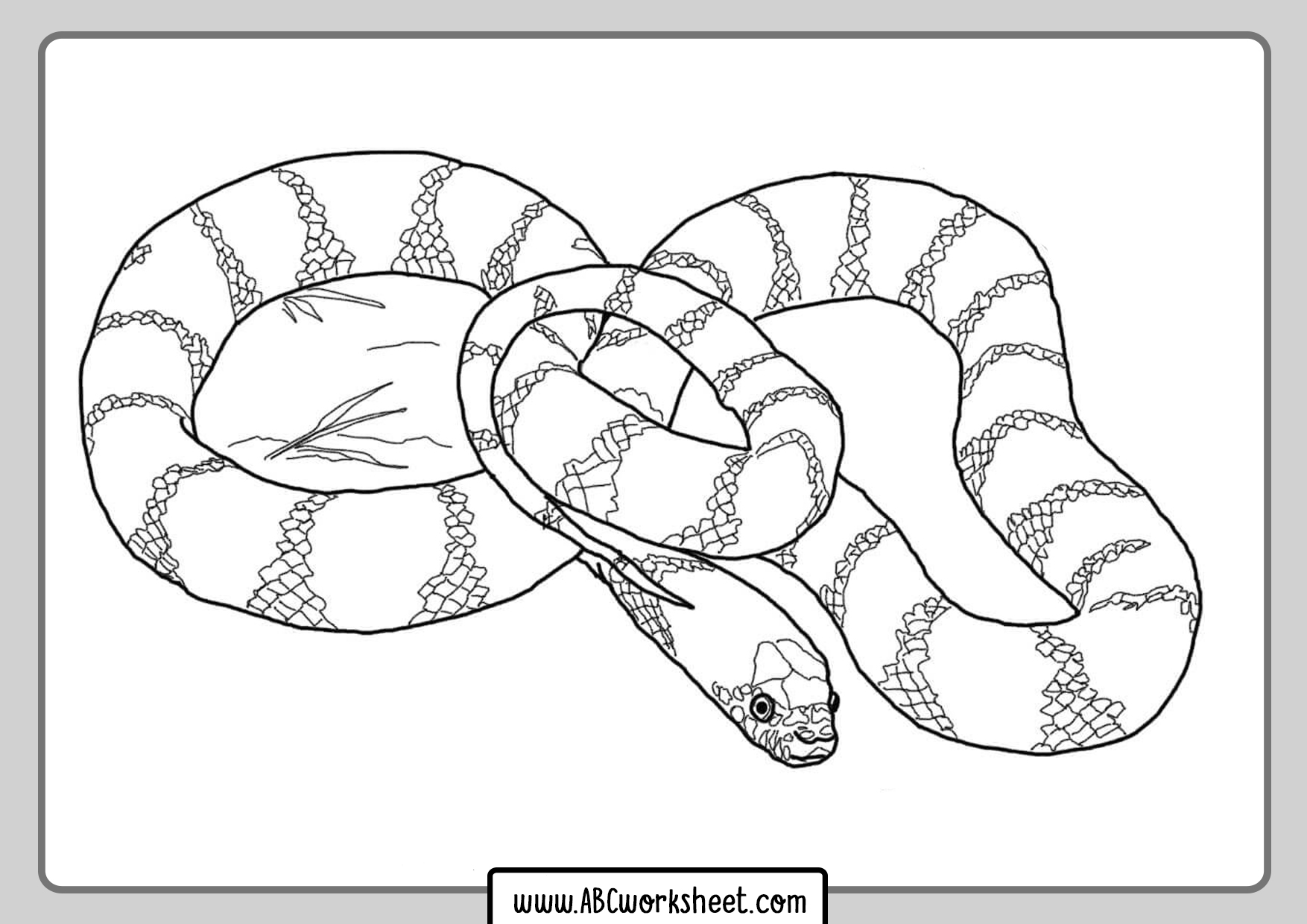 Coral Snake Coloring Page