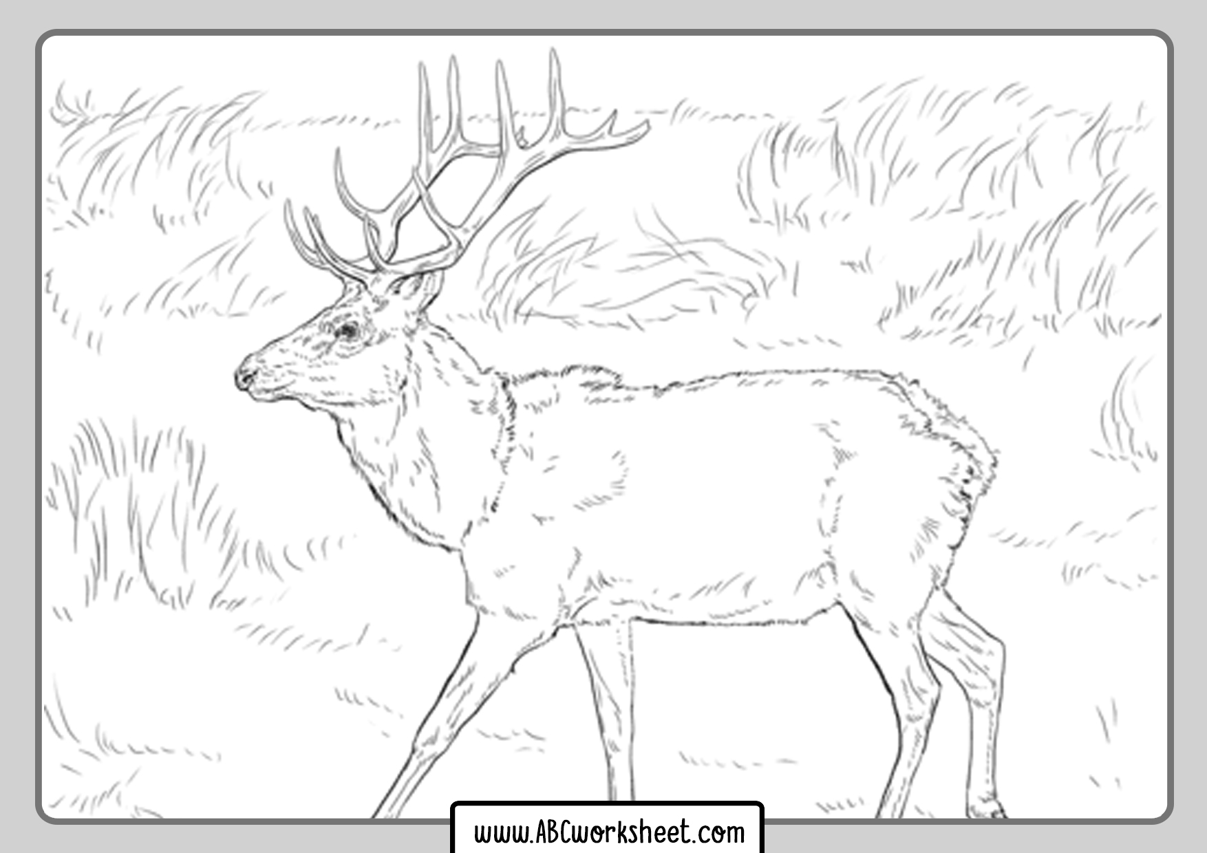 Deer Coloring Pages For Printing