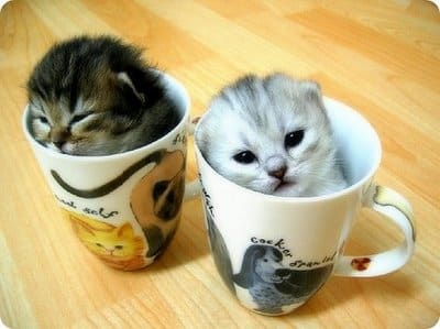 kitties_in_a_cup